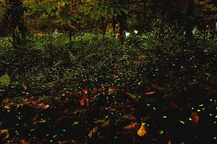 Bhandardara Fireflies Festival