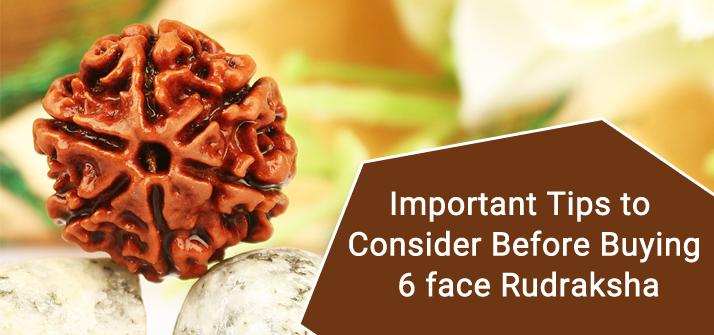 six face rudraksha benefits