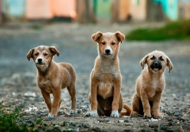 10 Dogs Breed Adopted in Bollywood as Pet